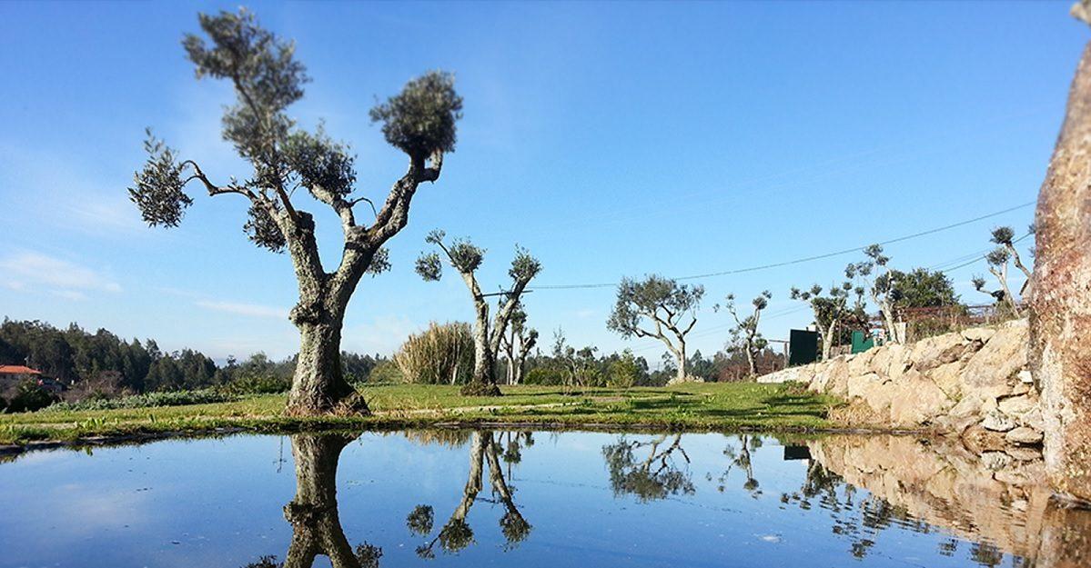 Jardim com árvores e água