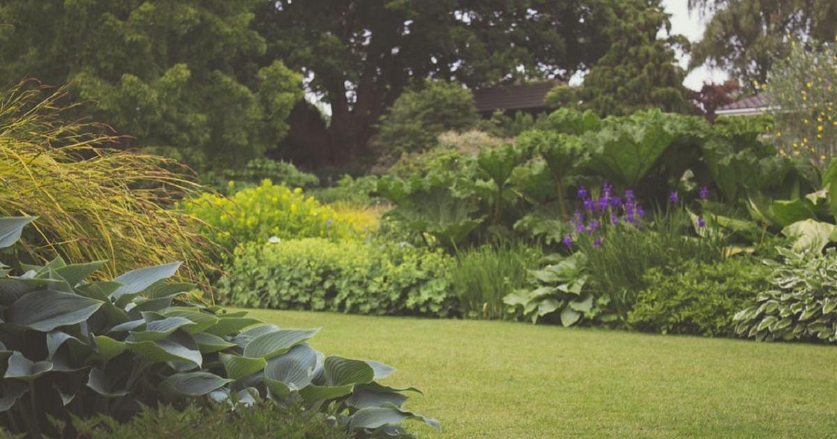 jardim com diversas plantas