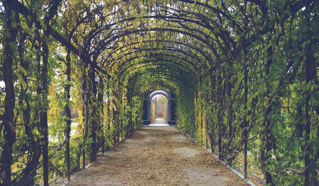 Jardins Luxuosos e Exuberantes