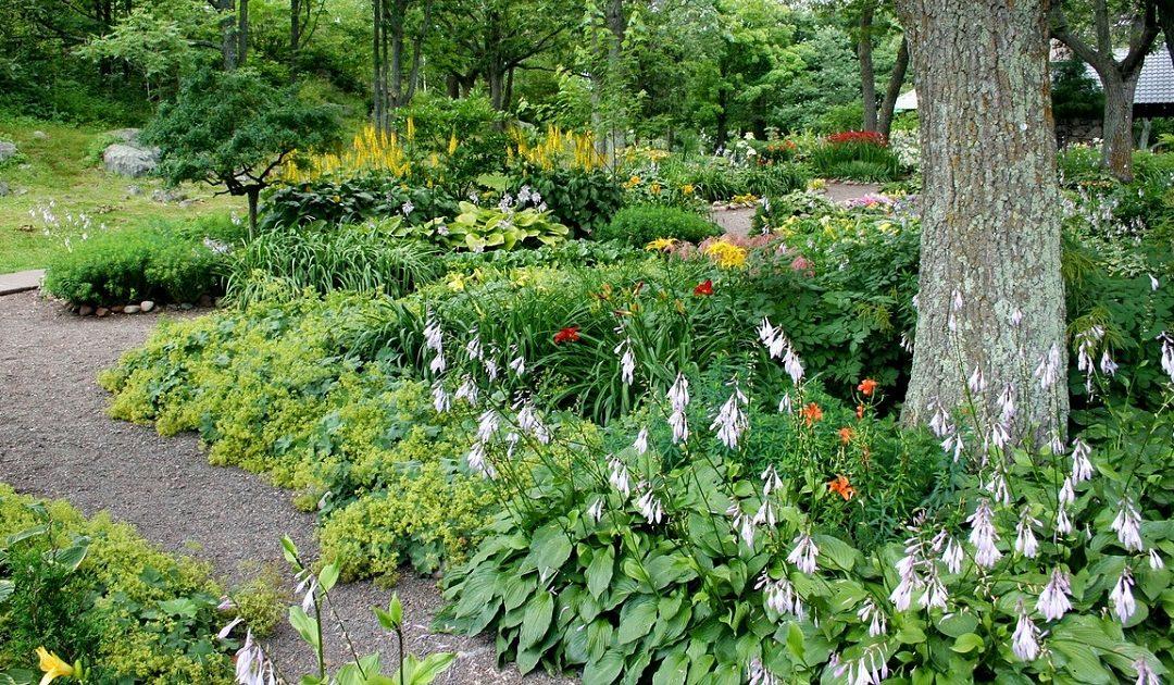 Cuide da saúde do seu jardim. Chame um… arquiteto paisagista!