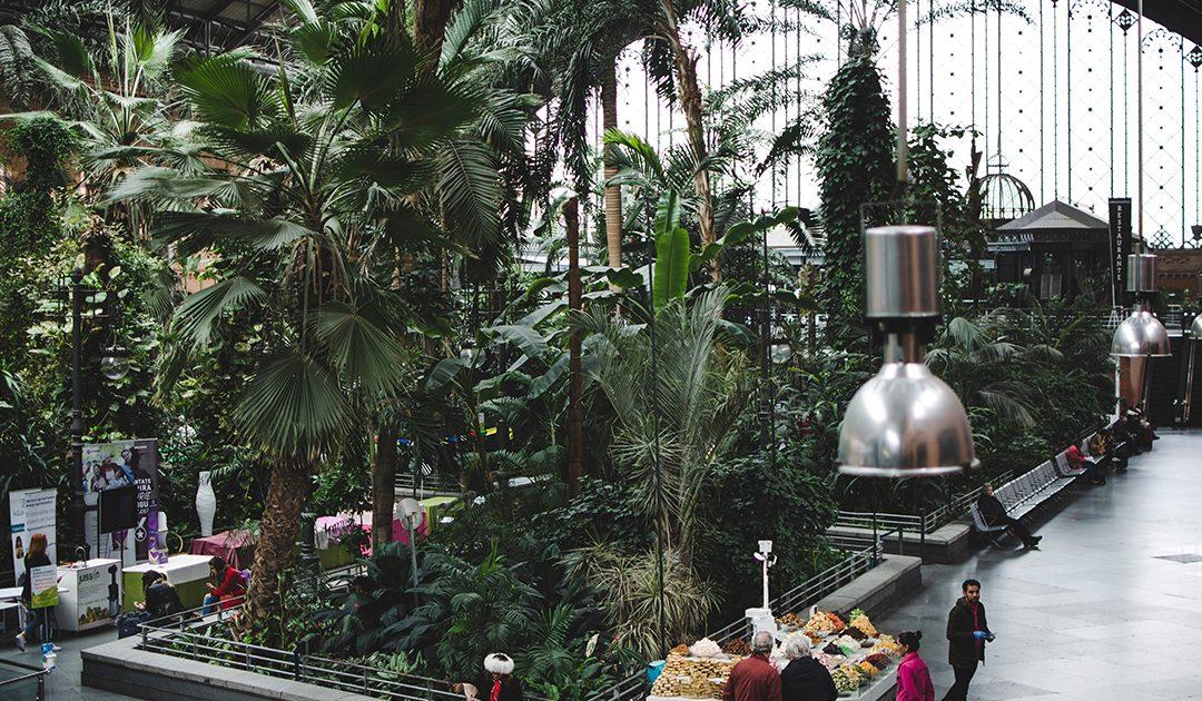 O Projecto de Jardins Interiores