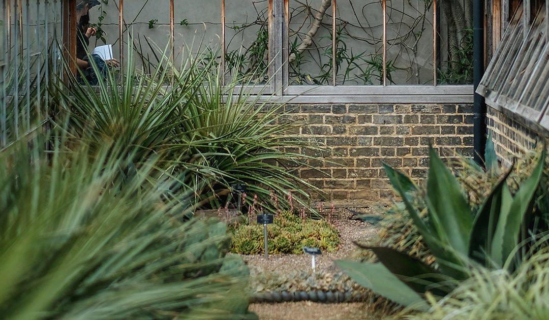 Jardins de inverno – Descubra estes fantásticos jardins