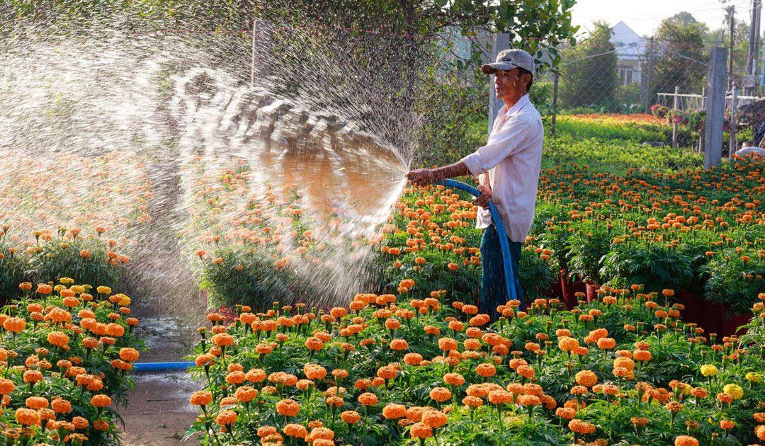 A importante sinergia entre paisagista e jardineiro
